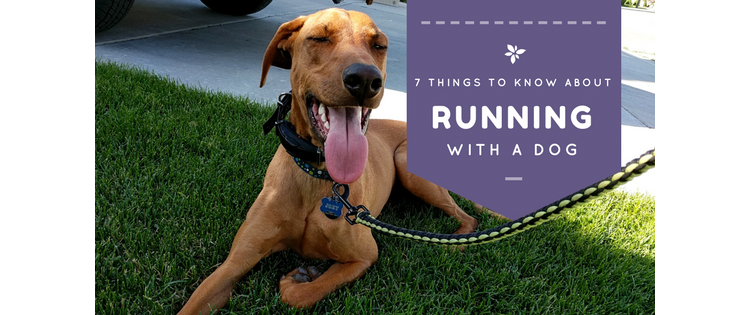 7+ Things to Know About Running With A Dog
