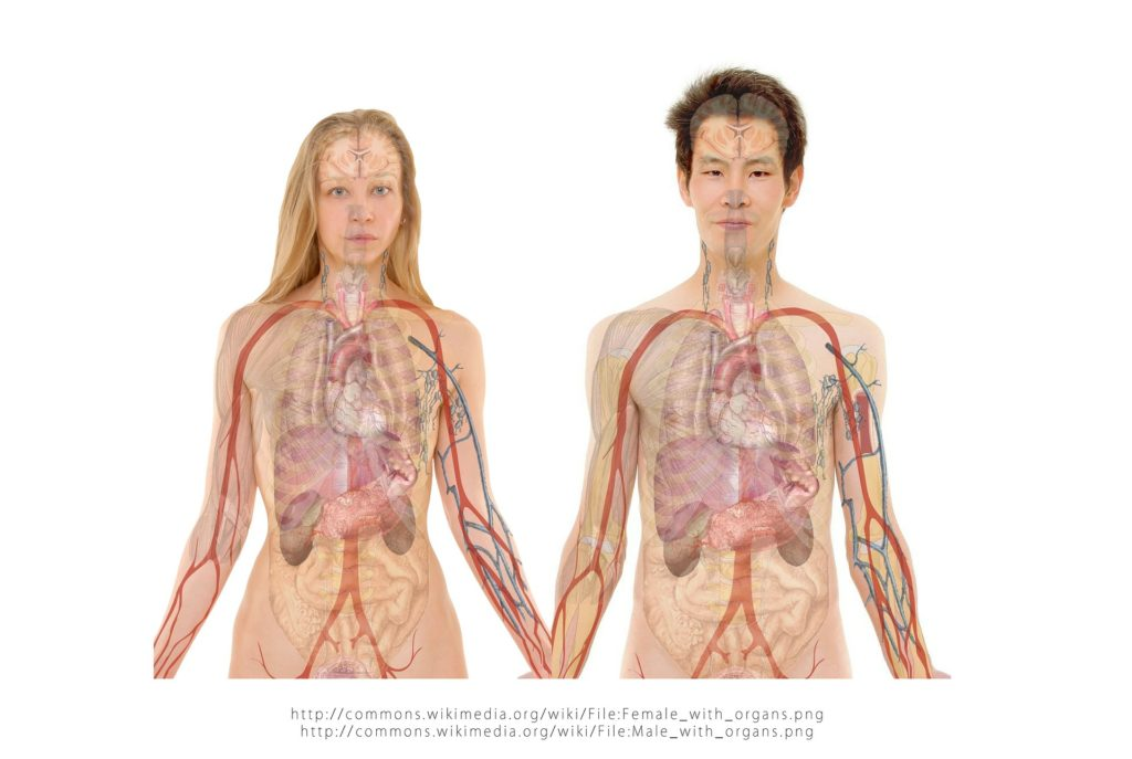 man and woman diagram of organs
