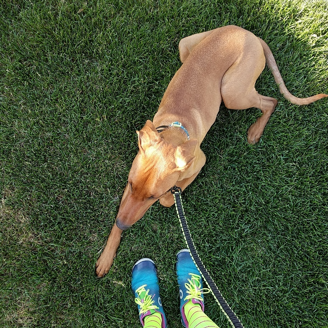 Joey by my feet after a run